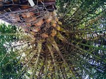 Bajo la palmera Foto de archivo libre de regalías