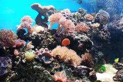 Bajo la superficie del mar Imagenes de archivo