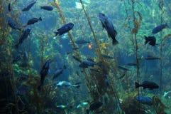 Bajo la superficie del mar Imágenes de archivo libres de regalías