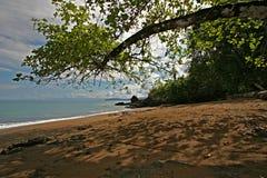 Bajo un árbol en una playa tropical fotos de archivo libres de regalías