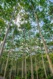 Bajo visión el árbol con la luz del sol Fotos de archivo