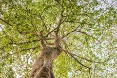 Bajo visión el árbol con la luz del sol Imágenes de archivo libres de regalías