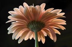 Bak av blomman Royaltyfri Bild