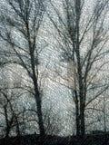 bak den glass treen Royaltyfri Foto