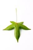 bak den isolerade leafen Royaltyfria Bilder