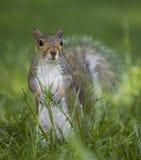 bak gräsnederlag Royaltyfria Foton