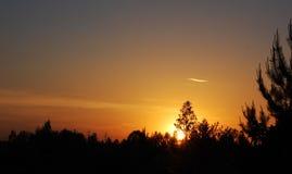 bak sörja plattform sommarsolnedgångtrees två Royaltyfri Fotografi