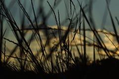 bak sörja plattform sommarsolnedgångtrees två Royaltyfri Foto