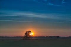 bak sets sun trees Royaltyfri Bild