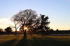 bak solnedgångtree Royaltyfria Bilder
