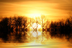 bak solnedgångtrees Royaltyfria Foton