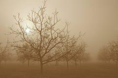 bak soluppgångtreesvalnöt Arkivbilder