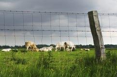 Bak staket fotografering för bildbyråer