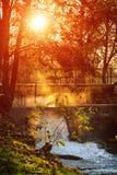 Bak träd Fotografering för Bildbyråer