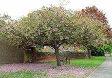 bak trädgården. .behind väggen. .under ett träd Arkivfoto