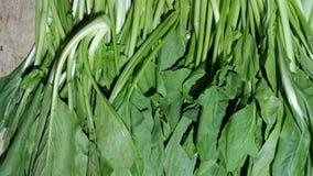 Bak vert frais choy ou caisim images stock