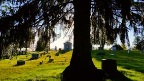 Bak Willow Tree Royaltyfria Foton