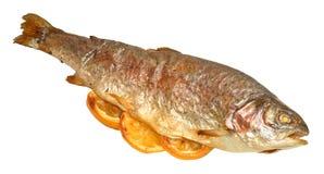Bakad fisk för regnbågeforell Royaltyfria Foton
