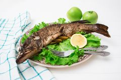 Bakad kryddig fiskgräsplanfrisee Arkivfoton
