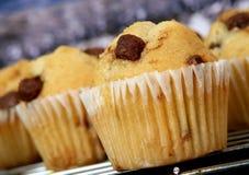 bakade muffiner för kök för chipchoklad guld- Royaltyfria Bilder