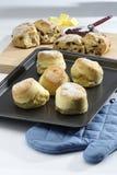 bakade nya scones Royaltyfri Bild