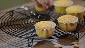 bakade nytt muffiner Ny muffinöken stock video