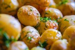Bakade potatisomslagspotatisar som är hela i deras hudar med solrosolja och dill till guld- brunt Arkivfoto