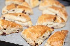 bakade scones för cranberry nytt arkivbild