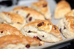 bakade scones för cranberry nytt arkivfoton