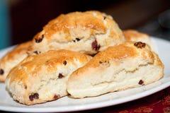 bakade scones för cranberry nytt royaltyfria foton