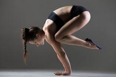 Bakasana瑜伽姿势 库存图片