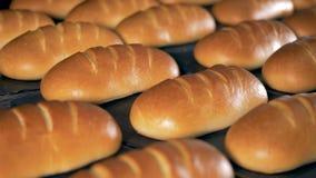 Bakat vitt bröd, slut upp Många loaves av vitt bröd på ett metallmagasin lager videofilmer