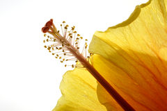 bakbelyst blomma fotografering för bildbyråer