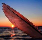 Bakbelyst fjäder Royaltyfria Bilder