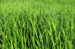 bakbelyst gräs Arkivbild