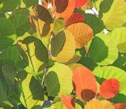 Bakbelyst gräsplan och röda sidor Royaltyfri Bild