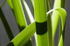 bakbelyst leavesrainforestvass Royaltyfri Fotografi