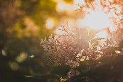Bakbelyst lila blomma Arkivfoto