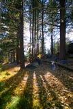 bakbelyst skog Arkivbild