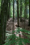 bakbelyst skog Royaltyfria Foton