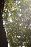 Bakbelyst spiderweb med oskarp lövverkbakgrund med filtrerat ljus arkivbilder