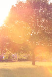 Bakbelyst träd i sommar Arkivbilder