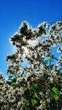 Bakbelysta blommor Royaltyfri Fotografi
