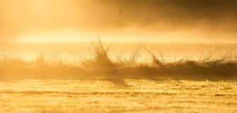 Bakbelysta Februari högväxta gräs Arkivfoto