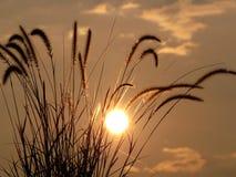 bakbelysta gräs Royaltyfria Bilder