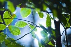 bakbelysta leaves royaltyfri foto