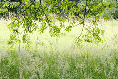 Bakbelysta sidor i skog Arkivbild