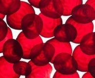 Bakbelysta skivor av rödbeta, gör sammandrag texturerad bakgrund Arkivfoton