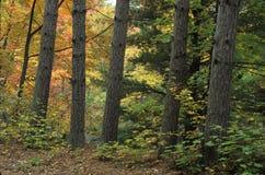 Bakbelysta träd Royaltyfri Bild