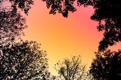 Bakbelysta träd och filialer i retro stil för abstrakt bakgrund Arkivfoton